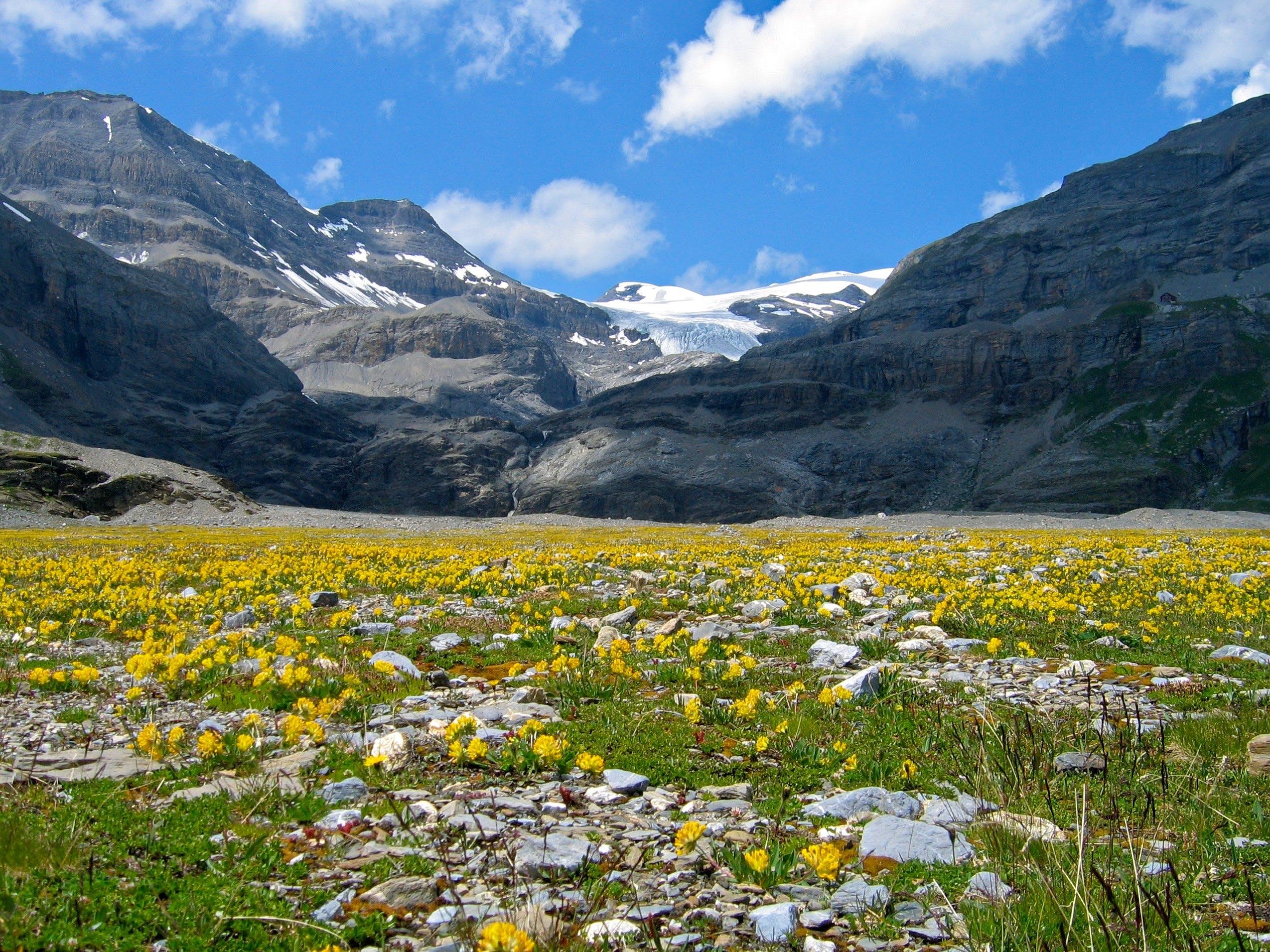 Flower Field Near Mountain