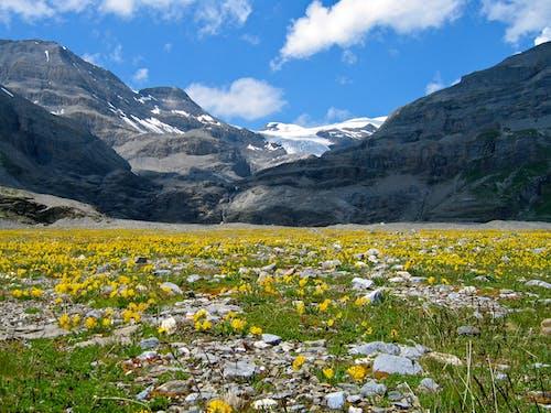 Fotos de stock gratuitas de alpino, césped, cielo, escénico