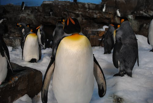 Group of Penguins Standing Near Rock