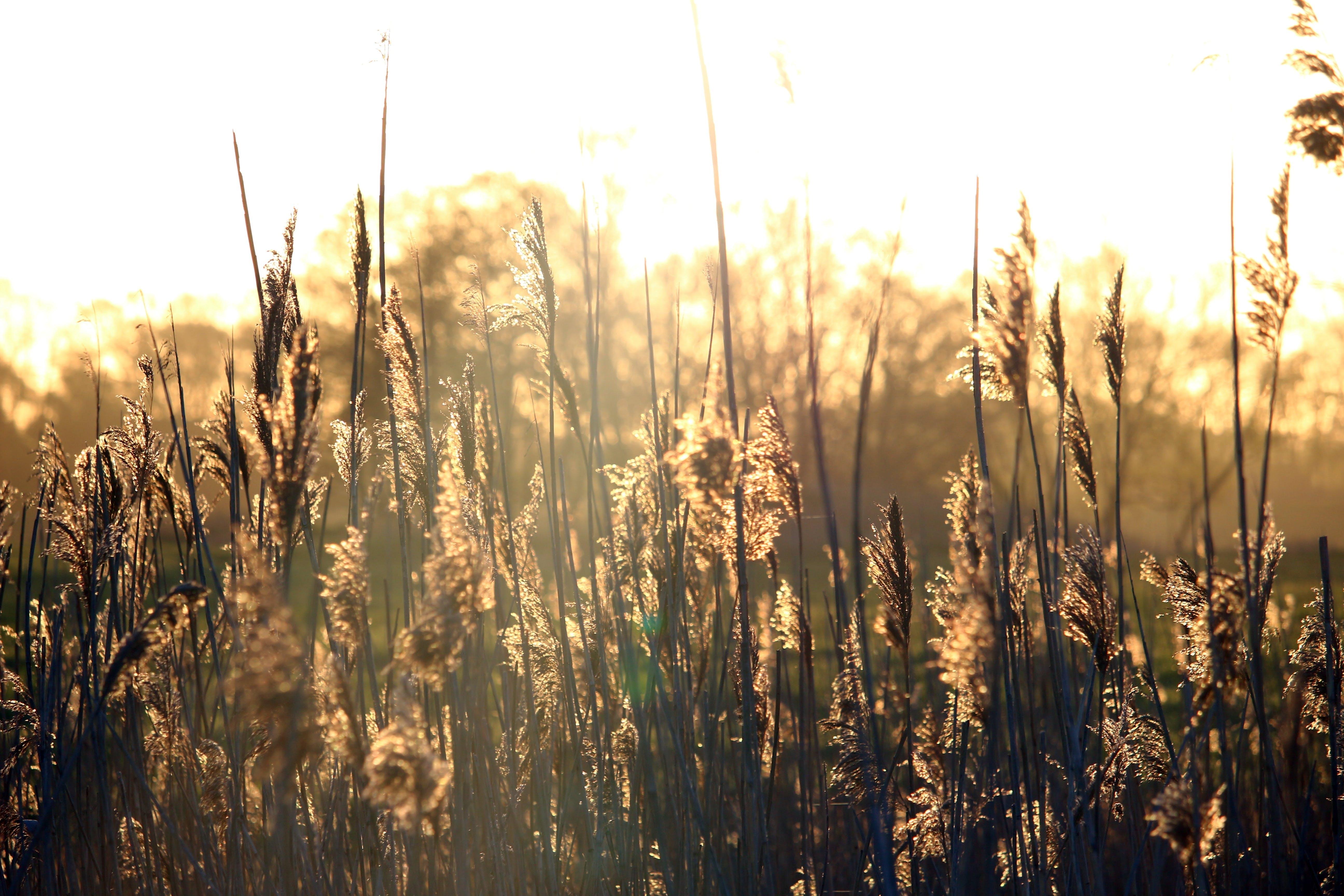 Základová fotografie zdarma na téma cereální, farma, hřiště, pastvina
