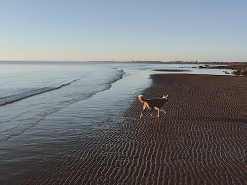 Безкоштовне стокове фото на тему «біля океану, берег моря, берег океану, брижі»