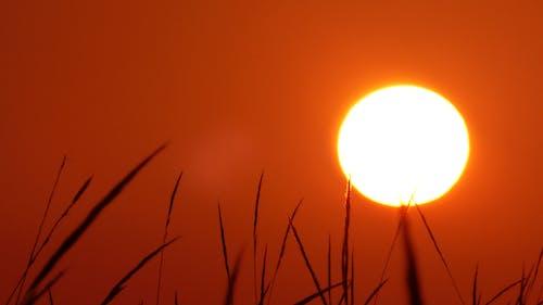 Foto profissional grátis de natureza, pôr do sol, verão