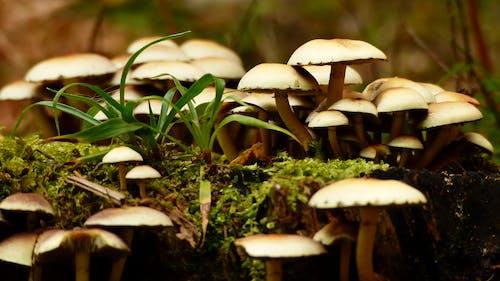 Foto profissional grátis de cogumelo, forrest, natureza