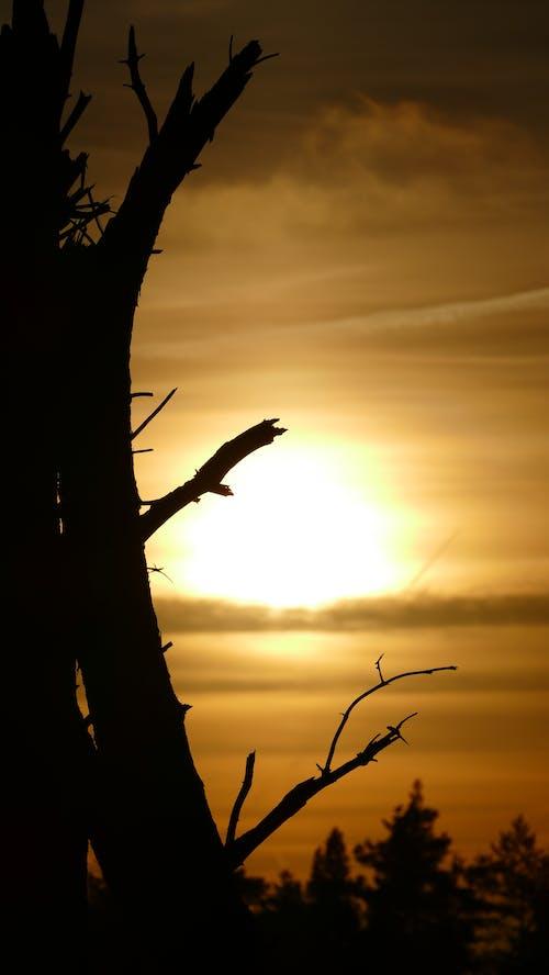 Foto profissional grátis de pôr do sol, siluette, tronco de árvore