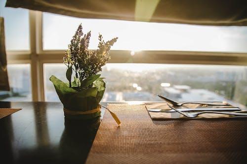 Photos gratuites de à l'intérieur, beau coucher de soleil, bifurcation, brouiller