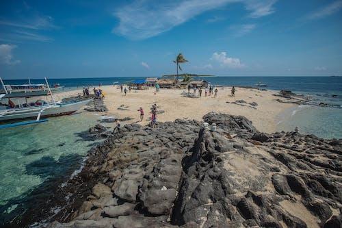Ingyenes stockfotó kókuszdió, tengerparti sziget témában