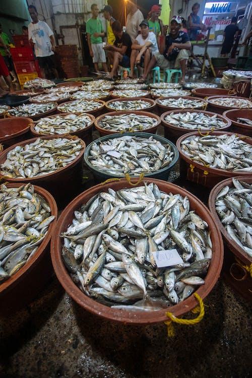 Ingyenes stockfotó hal, Halpiac témában