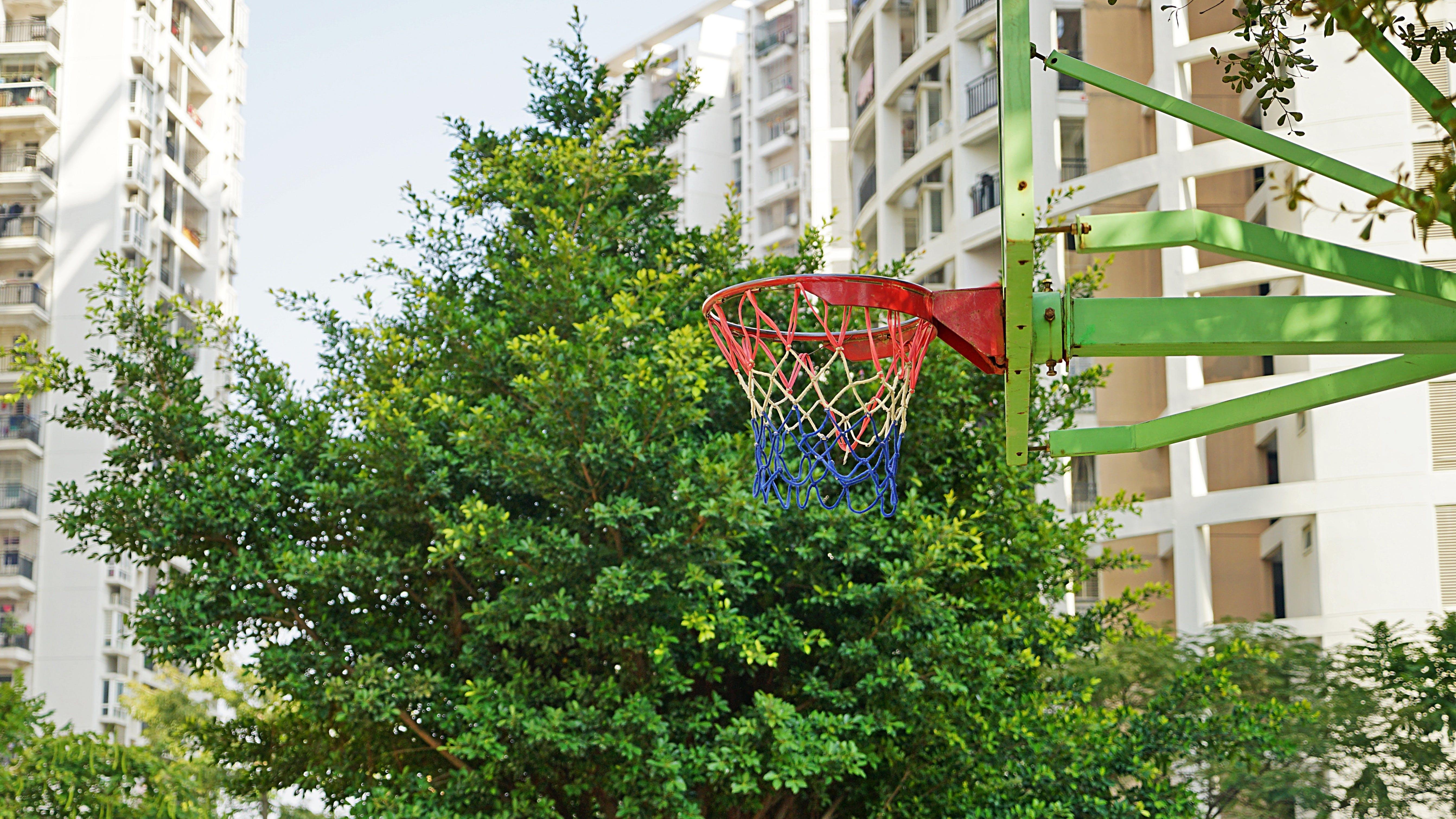Free stock photo of sunshine, spring, green, basketball