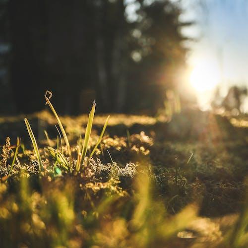 Fotobanka sbezplatnými fotkami na tému jar, krásny západ slnka, les, príroda