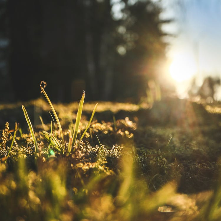 日光, 春, 森林