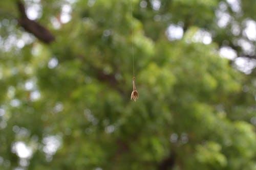 Ảnh lưu trữ miễn phí về ảnh macro, mạng nhện, nhiếp ảnh vĩ mô