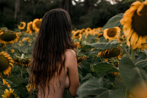 Photo of Topless Woman Near Sunflowers