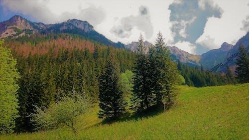 Gratis arkivbilde med bergen beskidy, beskidy, blå himmel, fjell