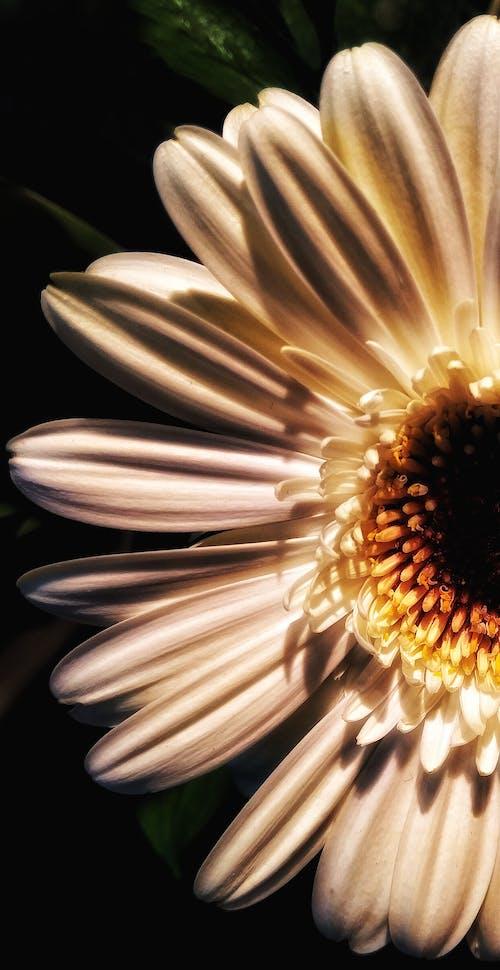 Δωρεάν στοκ φωτογραφιών με τριαντάφυλλο