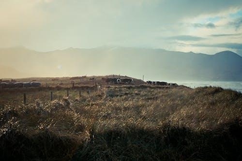 Photos gratuites de irlande, rural