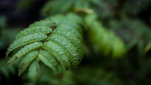 Fotobanka sbezplatnými fotkami na tému dážď, les, mokrý, náladový