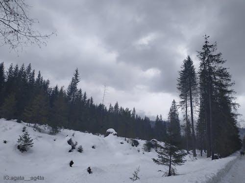 Gratis arkivbilde med 4k-bakgrunnsbilde, årstid, bakgrunn, blå himmel