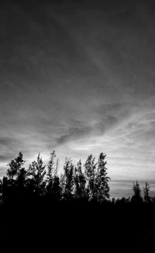 Безкоштовне стокове фото на тему «Природа, чорно-білий»