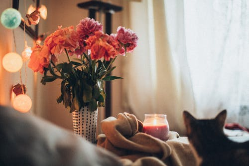 Pink and Orange Petaled Flowers In A Vase