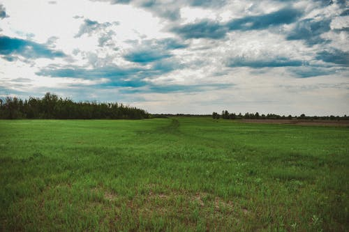 Foto stok gratis alam, jejak, pohon, rumput