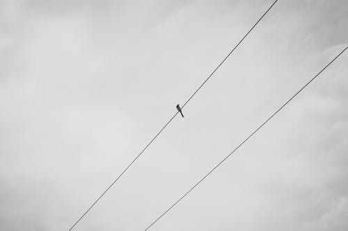 Безкоштовне стокове фото на тему «дроти, мінімалізм, птах, сіре небо»