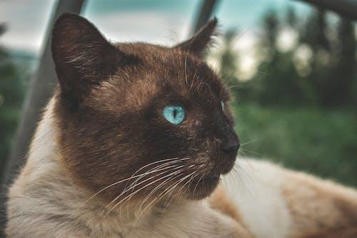 Foto stok gratis beristirahat, binatang, hari, kucing