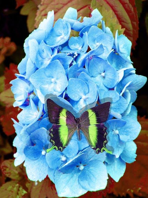 夏天, 帝王蝶, 晚上, 柑橘蝴蝶 的 免費圖庫相片
