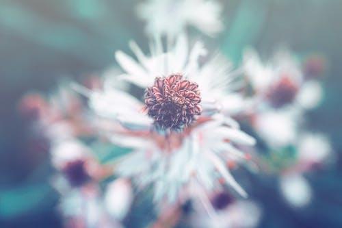 Foto profissional grátis de azul, beleza, cheio de cor, ecológico