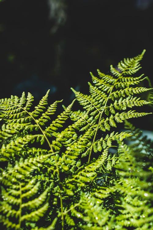 Kostnadsfri bild av anläggning, grön, löv, natur