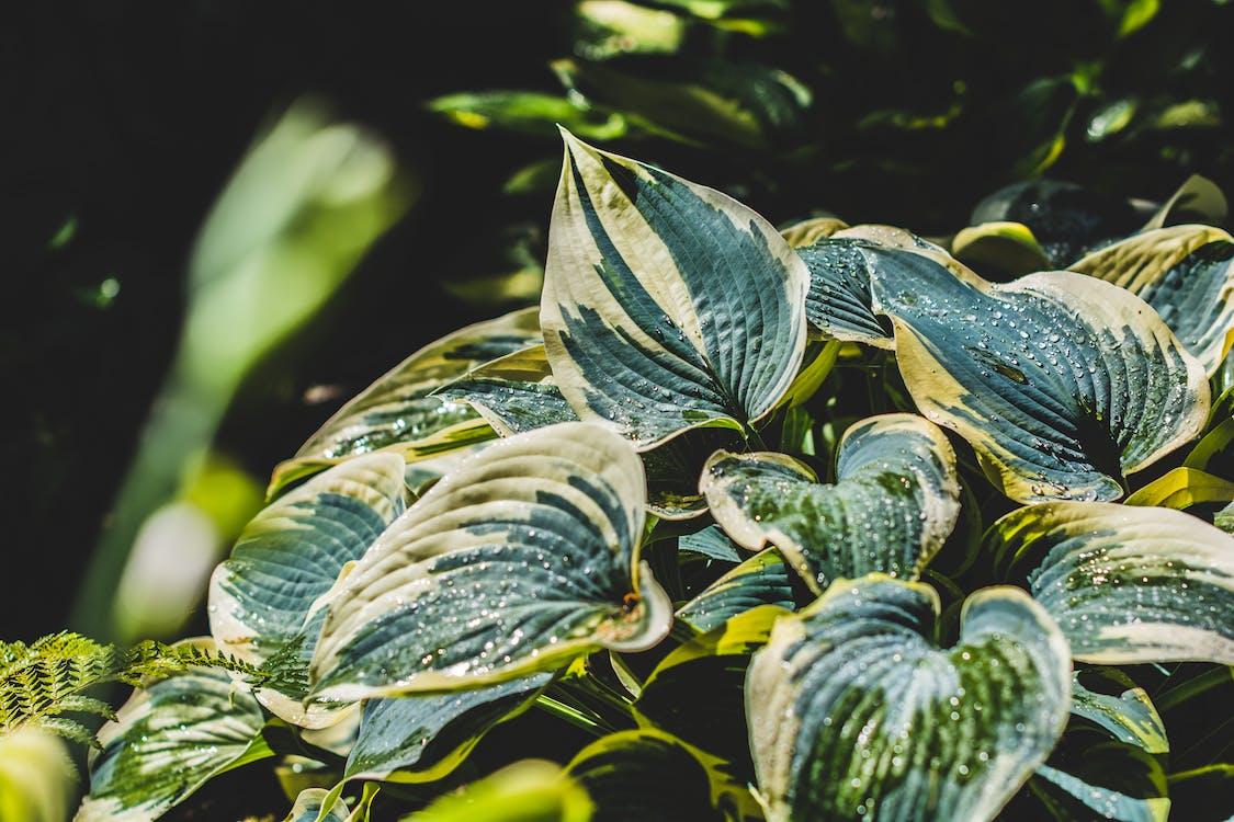 blade, blomster, grøn