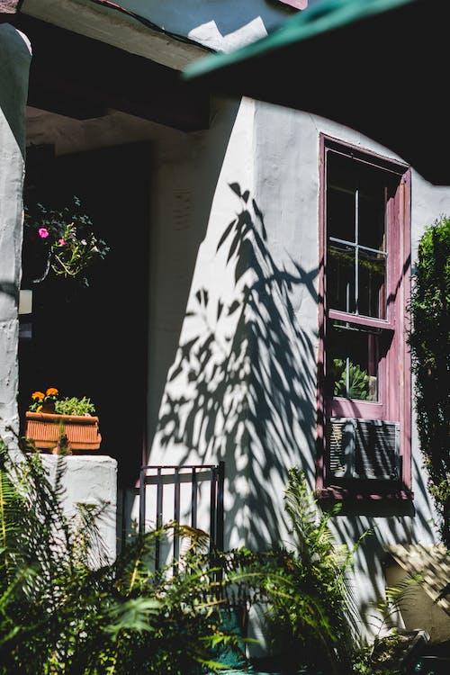 Kostnadsfri bild av anläggning, arkitektur, hus, löv