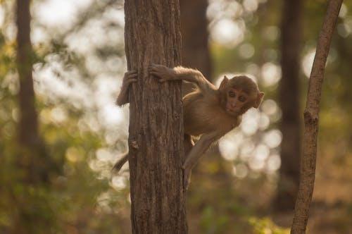 คลังภาพถ่ายฟรี ของ ลิง, อินเดีย