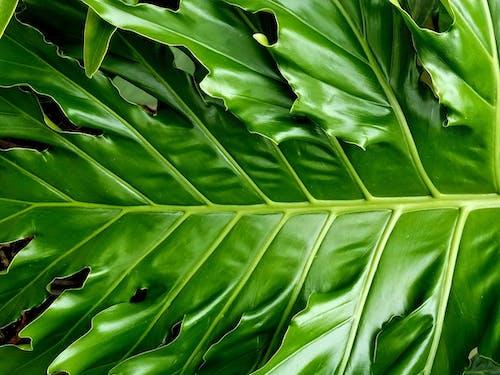 Fotos de stock gratuitas de botánico, brillante, color, crecimiento