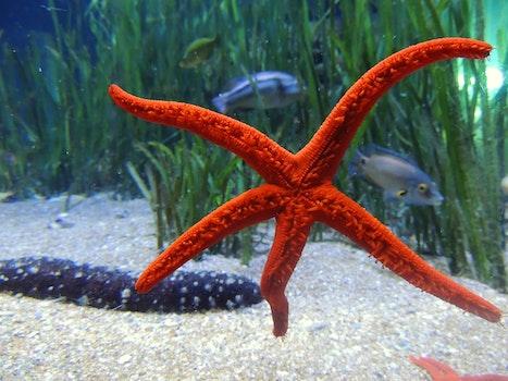 Free stock photo of sea, water, underwater, star
