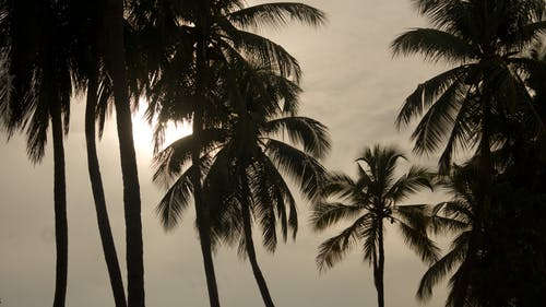Silhouette of Palm Trees during Cloudy Daytime