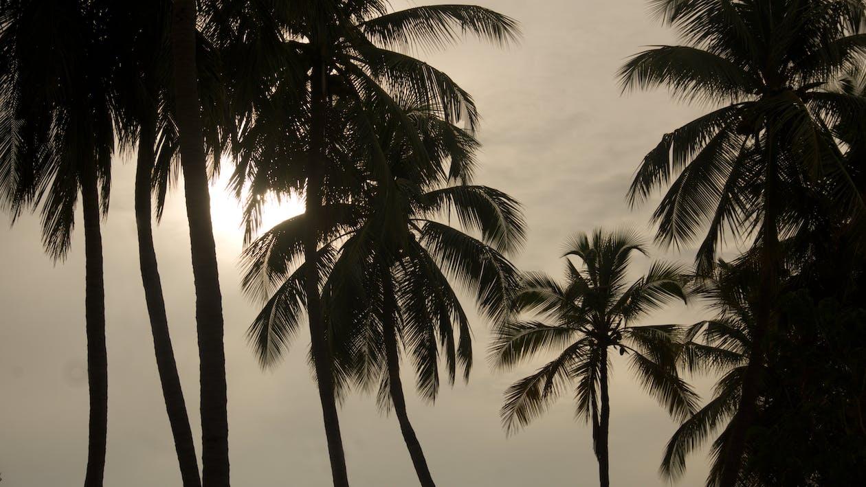 ada, ağaç, avuç içi