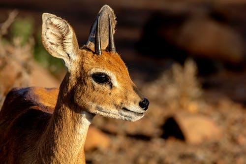 國家公園, 野生動物, 降壓 的 免費圖庫相片
