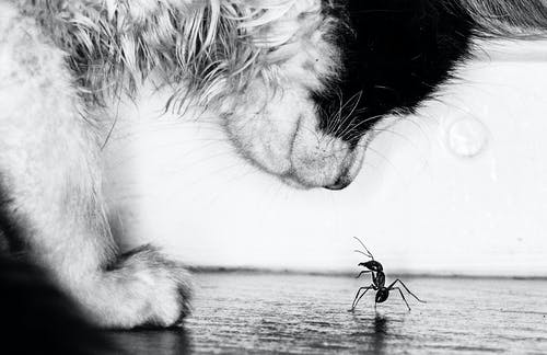 Free stock photo of animals, ant, kitten, the fight