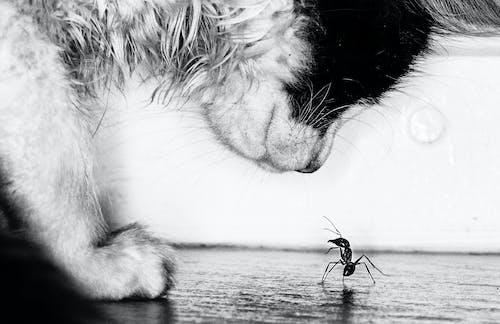 小貓, 爭鬥, 螞蟻 的 免費圖庫相片