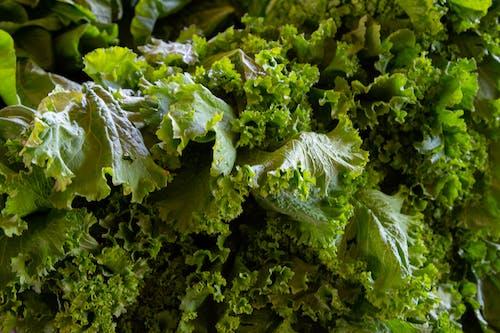 คลังภาพถ่ายฟรี ของ agbiopix, การเกษตร, ผักคะน้า, สีเขียว