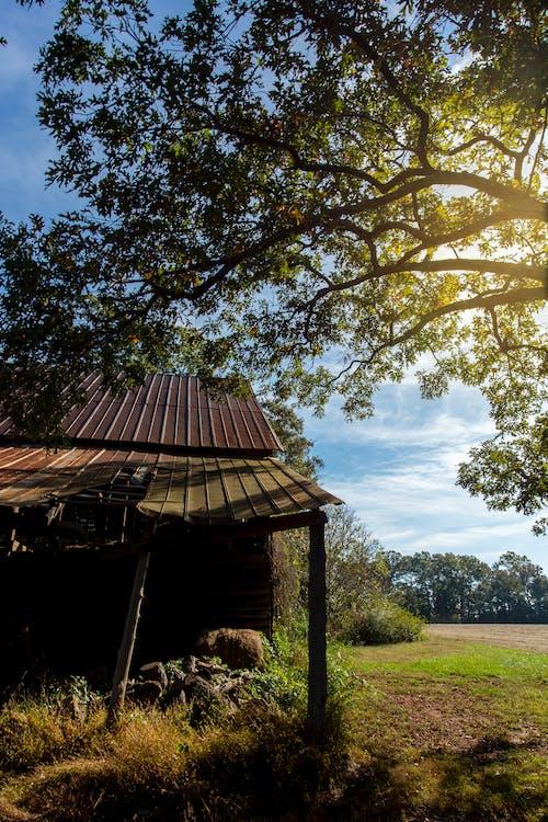 คลังภาพถ่ายฟรี ของ agbiopix, การเกษตร, ชนบท, ยุ้งข้าว