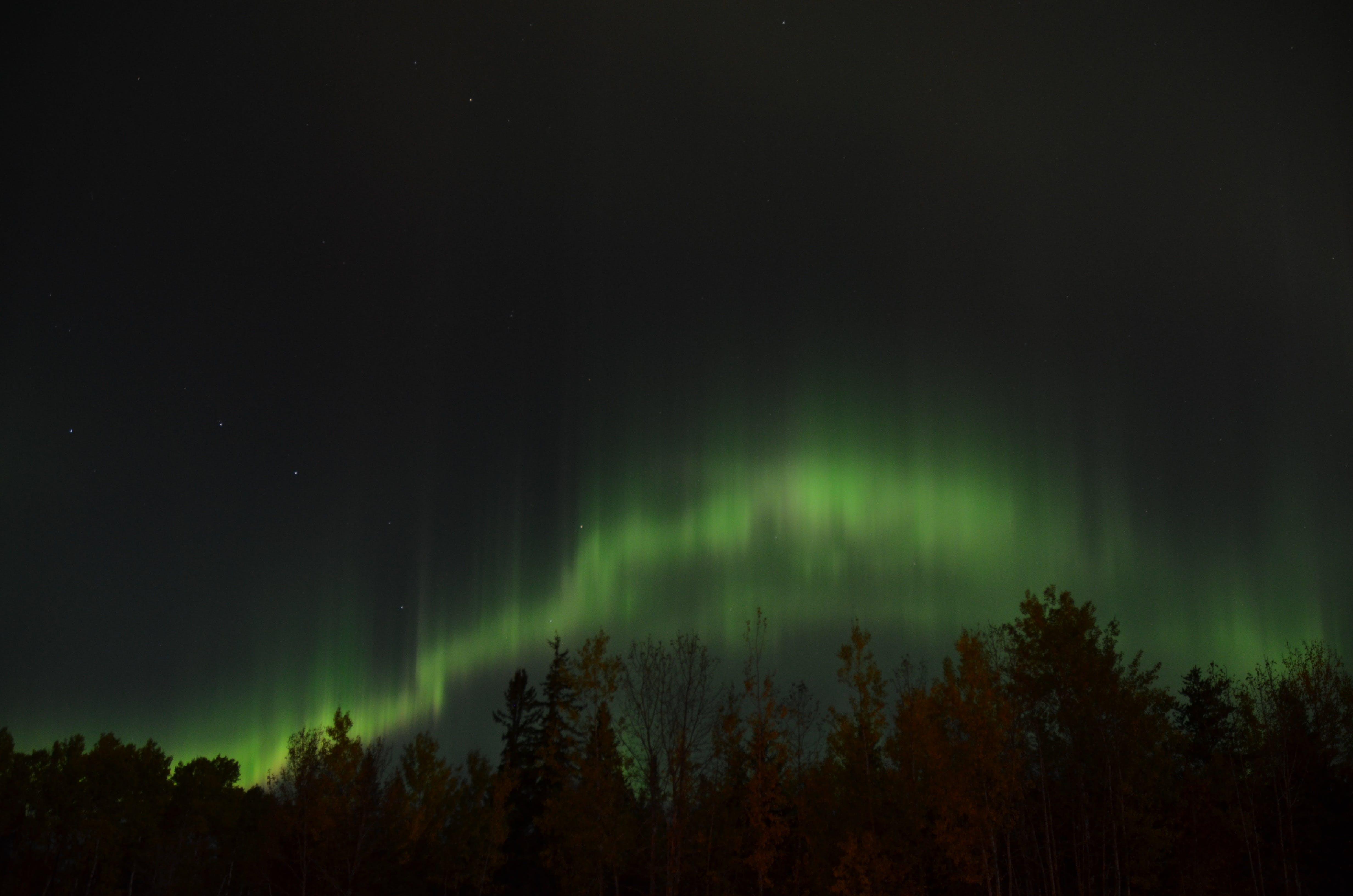 Kostenloses Stock Foto zu astronomie, atmosphäre, aufnahme von unten, bäume