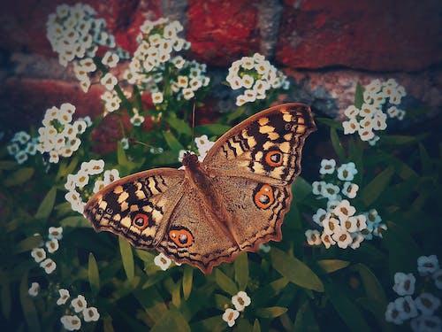 개화, 곤충, 곤충 사진, 꽃의 무료 스톡 사진