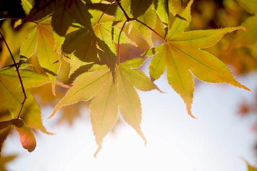 Δωρεάν στοκ φωτογραφιών με καλοκαιρινά φύλλα, πτώση των χρωμάτων, πτώση φύλλων