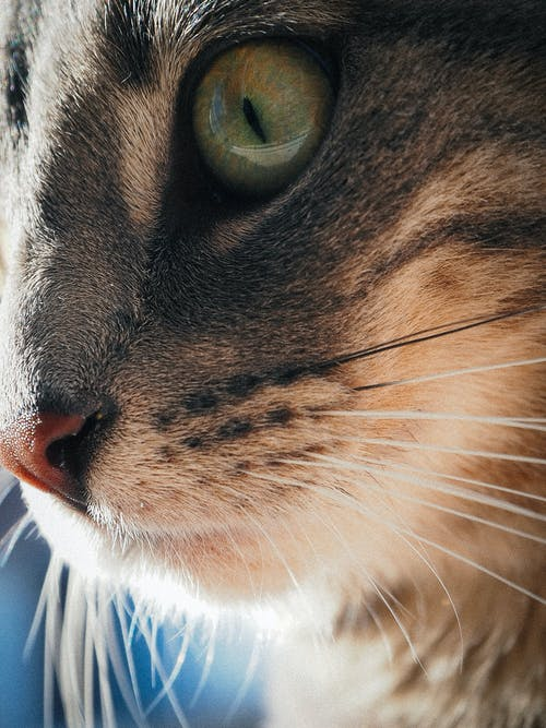 Free stock photo of cat, close-up, close-up view, green