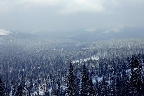Безкоштовне стокове фото на тему «Блакитні гори, гірськолижний курорт, гори, дерева»