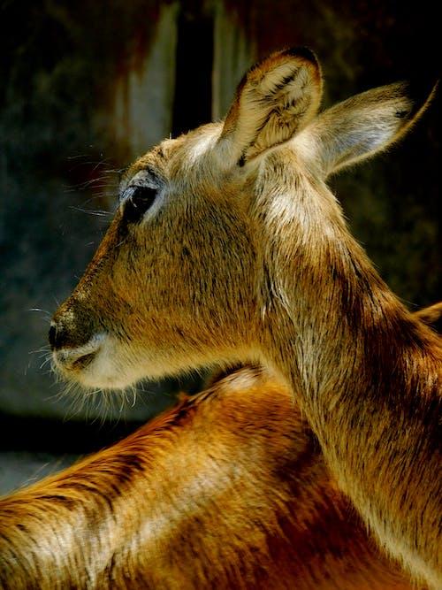 Gratis arkivbilde med dyr, dyrefotografering, dyreportrett, dyreverden