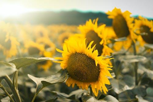 Kostnadsfri bild av blommor, blomning, dag, dagsljus