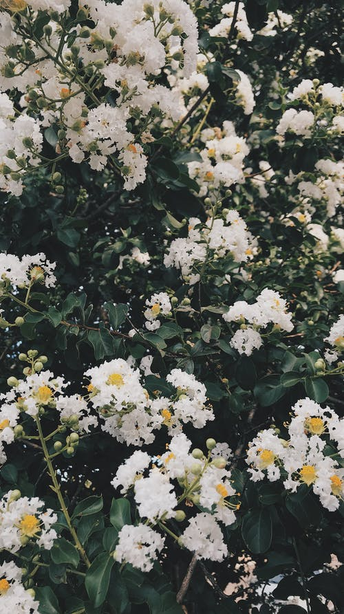 Free stock photo of beautiful flower, flower wallpaper, iphone wallpaper, white flowers