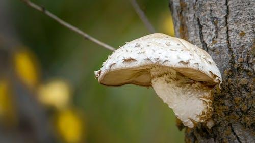 Fotos de stock gratuitas de hongos, seta de bosque